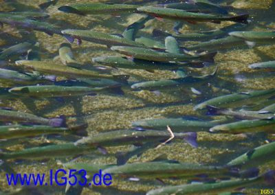 kaleu_2010_0001